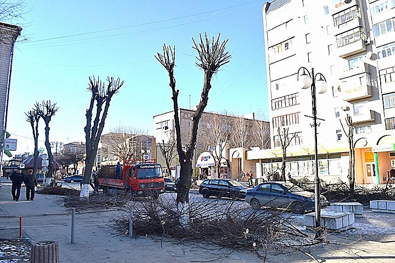 Дерева по Соборній