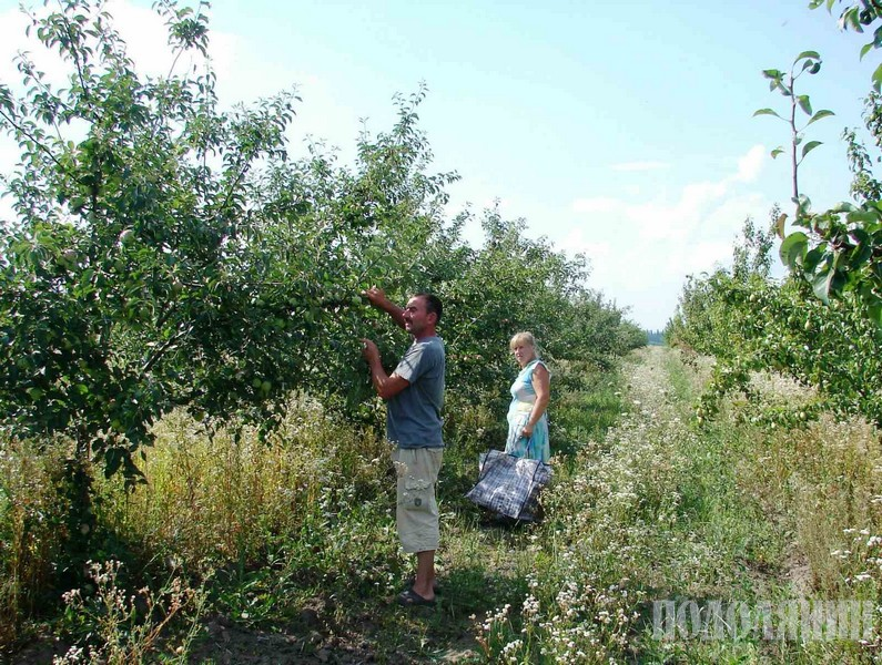 Анатолій Григорчук у власному саду